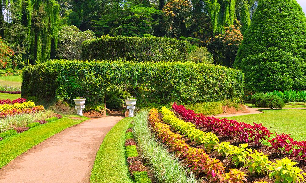 Botnical garden