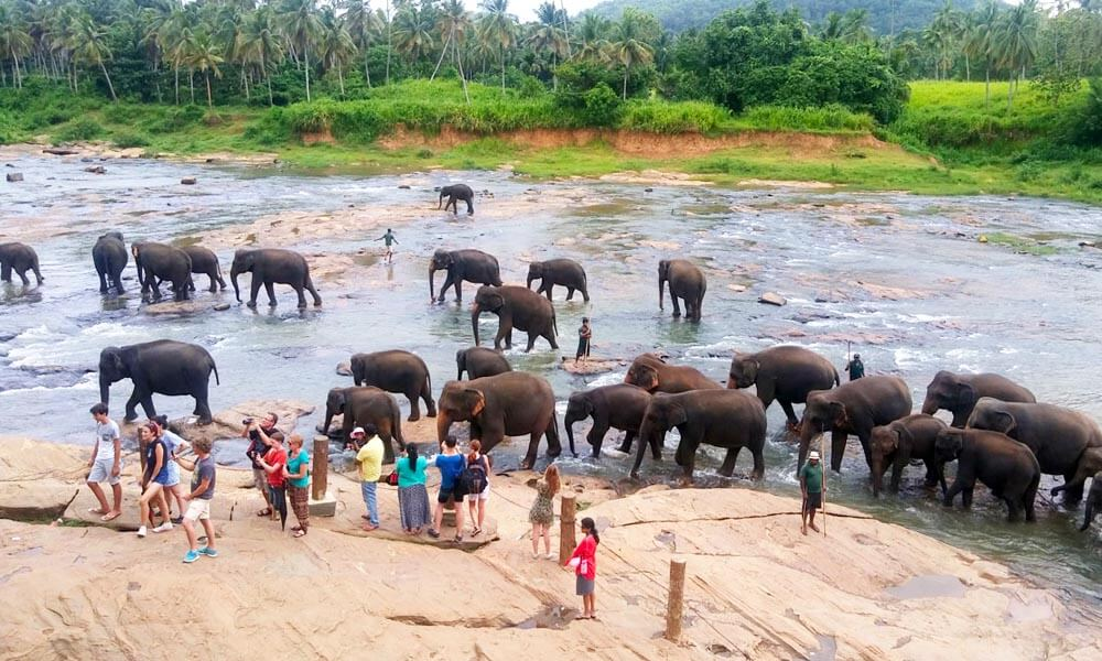 Elephant Orphanage at Pinnawela