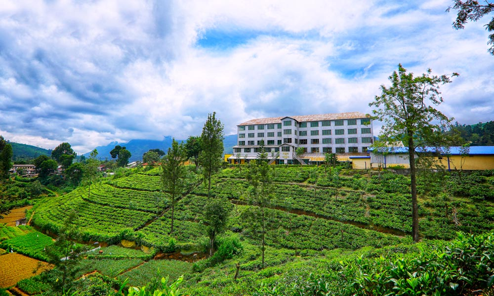 Tea Factory and Plantation
